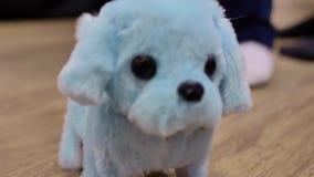 Собака clockwork игрушки детей мягкая, смешные движения на поле, конец-вверх сток-видео