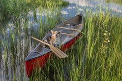 Собака Corgi в каное Стоковая Фотография RF