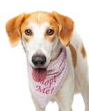 Собака Crossbreed спасения портрета счастливая стоковое изображение