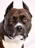 Собака, doggy, фиксатор, doggie, пуск, защелка стоковое изображение rf