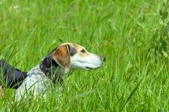 Собака dressiruem девушки внешняя Стоковое фото RF