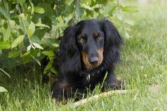 собака eyes щенок Стоковые Фотографии RF