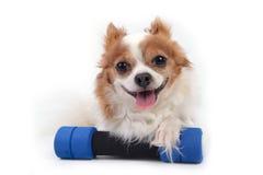 Собака Fittness Стоковая Фотография RF