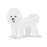 Собака frise Bichon на белой предпосылке Стоковое Изображение RF