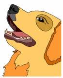 собака labrador Стоковое фото RF