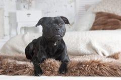 Собака lyings на кресле Стоковые Изображения