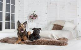 Собака lyings на кресле Стоковая Фотография