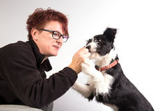 Собака mixedbreed детенышами Стоковое фото RF
