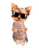 Собака Oktoberfest с бочонком пива стоковое изображение