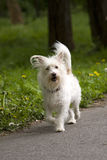 собака outdoors Стоковое Фото