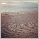 Собака Pawprints в песке на пляже Provincetown Стоковая Фотография RF