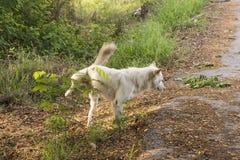 Собака peeing стоковые изображения