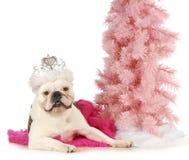 Собака Princess Стоковые Изображения
