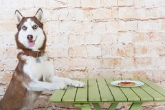 Собака ` s шелухи крадет часть сосиски от таблицы в секрете от предпринимателей Стоковые Изображения RF