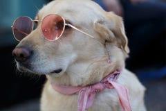 собака 70s стоковое изображение