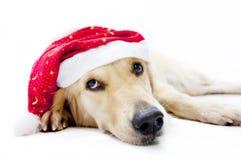 собака s santa Стоковое фото RF