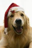 собака santa рождества Стоковое Изображение