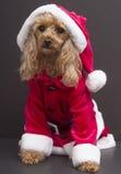 собака santa Стоковая Фотография