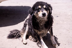 собака shaggy Стоковые Фото