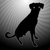 собака silhouetted Стоковое Фото