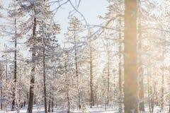 Собака sledding в Лапландии Стоковое Изображение