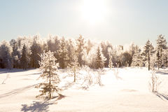 Собака sledding в Лапландии Стоковое фото RF