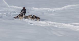 Собака Sledding в Швейцарии III Стоковые Фотографии RF