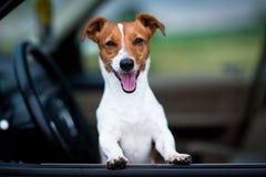 Собака Smilling Стоковое Изображение