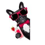 Собака smoothie коктеиля Стоковые Фото