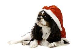 Собака Spaniel короля Карла нося шлем Кристмас Стоковое Изображение