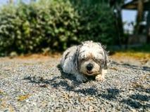 собака sunbathing Стоковая Фотография