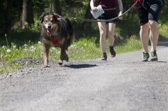 Собака trekking стоковая фотография rf