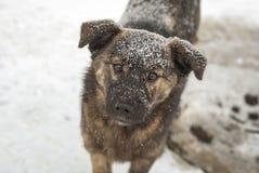 Собака Vagabond Стоковые Изображения