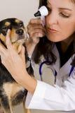 собака vetrinarian Стоковое Изображение