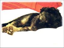 Собака Vito Стоковое фото RF