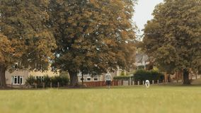 Собака Whippet играя усилия & ход после шарика в замедленном движении сток-видео