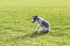 Собака Whitby Стоковое Изображение