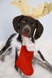 Собака Xmas Стоковая Фотография
