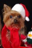 собака yorkshire рождества Стоковая Фотография