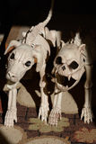 Собаки ада Стоковое фото RF