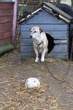 собаки бедные lonelly стоковые изображения rf