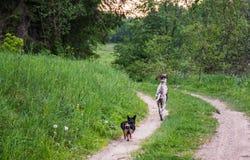 Собаки бежать в лесе Стоковое Изображение RF