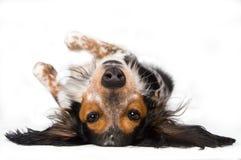 собаки внешняя сторона вниз Стоковое фото RF