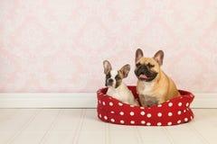 Собаки в корзине стоковые изображения rf