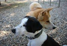 Собаки в парке собаки Стоковые Фото