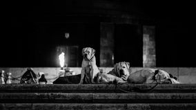 Собаки в парке Стоковые Фотографии RF
