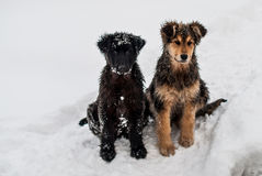 Собаки в снежке Стоковое Изображение