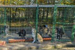 Собаки в укрытии стоковое фото