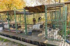 Собаки в укрытии стоковое изображение