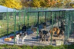 Собаки в укрытии Стоковая Фотография